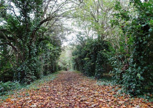 Ancient pathway: Sutton Trod