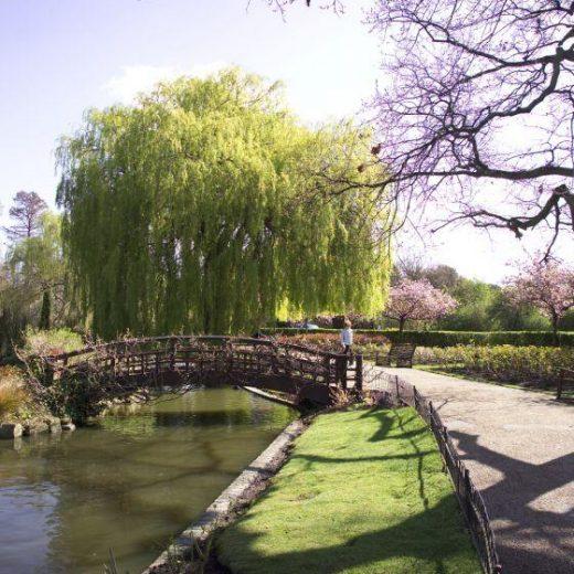 Lake at Regent's Park, London
