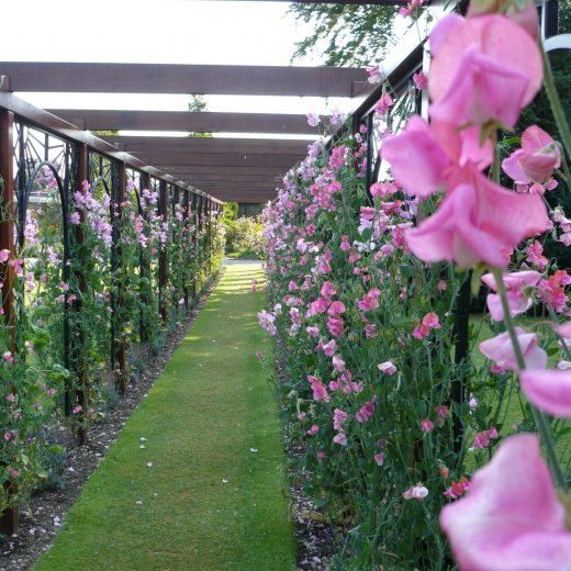 Pergolas with flowers make an attractive walkway